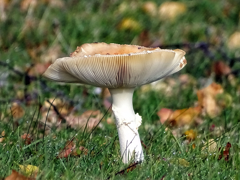 Fungi poisonous on the cliffe
