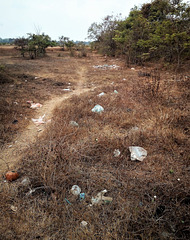 Nature plastifiée ou horreur cambodgienne