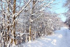 Winterwanderung am 1. Januar 2015