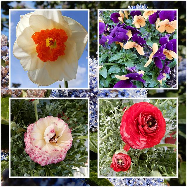 joyeux printemps à tous,