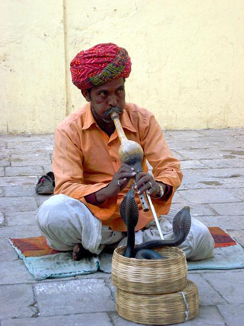 Charmeur de serpents à Jaipur (Inde)