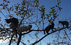 L'arbre à chats