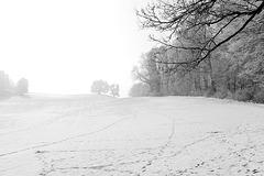 leichte Nebelschwaden ziehen auf  (in black and white)