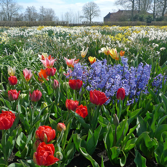 Nederland - Limmen, Hortus Bulborum