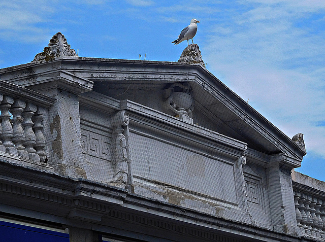 Neo classical with seagull