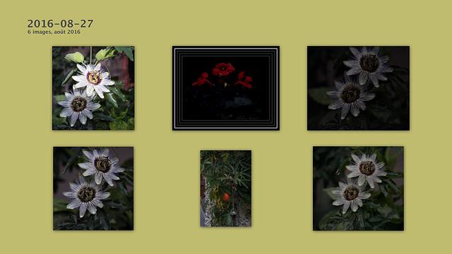 fleurs ma passion  aussi