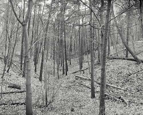 Wald bei Falkenstein // -wald-06073-co-16-12-18sm