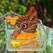 Schmetterlingsfrühstück