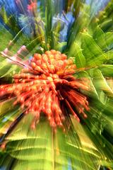 SSC Zoom Burst. Rowan berries
