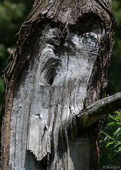 auf den Azoren gib's angeblich keine Waldgespenster (© Buelipix)