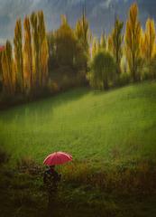 AINSA (Espagne ), les peupliers et l'ombrelle rouge