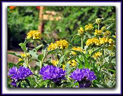 Garden Colour.