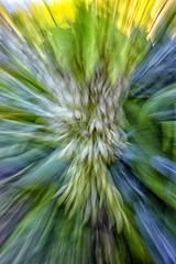 Eucomis using zoom burst technique
