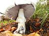 Giant mushroom...