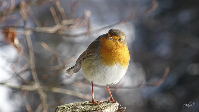 it's robin again