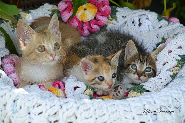 My sweeties...