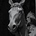 Der Bamberger Reiter - The Bamberg Horseman