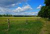Blicks in den den Teufelsbruch im Müritz Nationalpark - View into the Teufelsbruch in the Müritz National Park - HFF