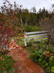 Der Zaun mit Herbstimpressionen
