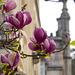 Spring at Bussaco Palace