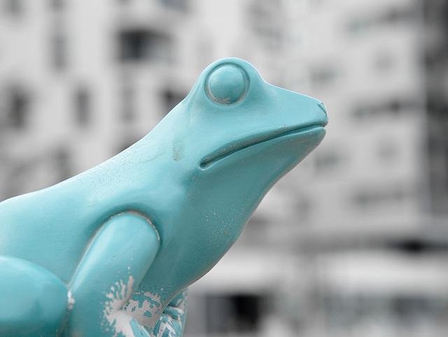 Blind Frog