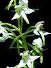 fleur sauvage 1