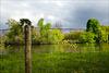Bois de Vincennes, HFF