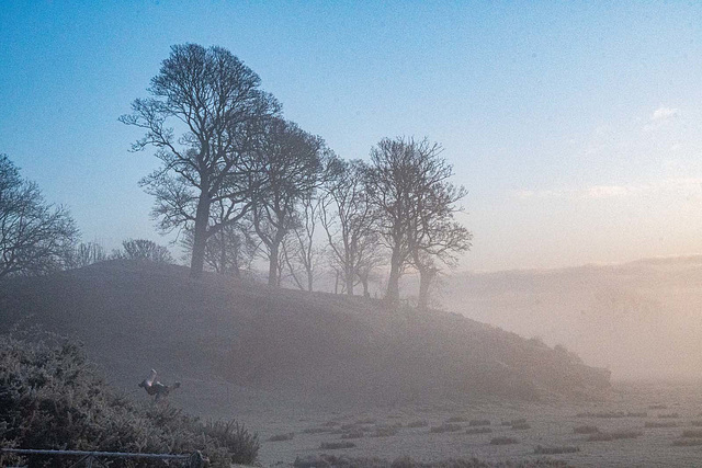 Landscape images from a walk this morning