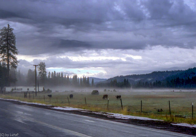 Childs Meadows. Tehama County, CA - Sept. 1989