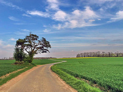 1474-0781ac Countryside Little Road in Spring