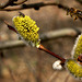 revival in spring                 ( wiosenne ożywienie )