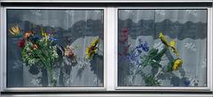 Des fleurs derrière la vitre