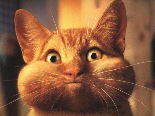 Chat qui a avalé la souris du Mac
