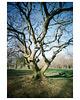 pinhole tree
