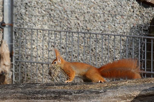 Explored - Emsiges Eichhörnchen I (Wilhelma)