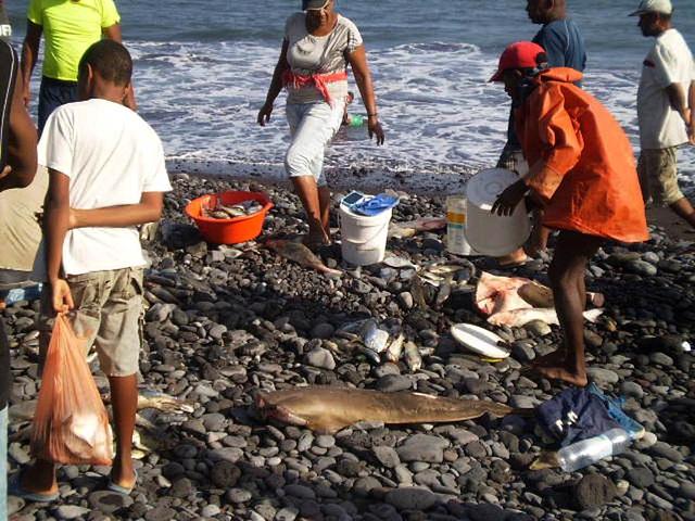 Fresh fish sale at the beach.