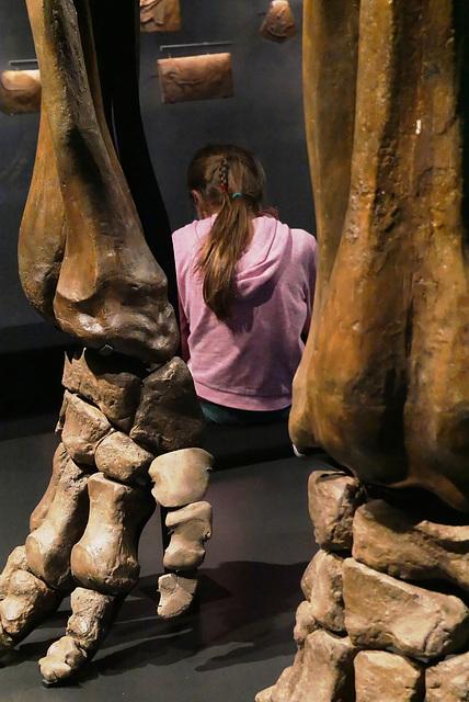 Pieds de mammouth et queue de cheval