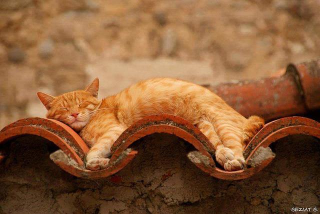 Canapé en tuiles  pour chat de gouttière ...