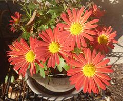 Ein kleines Wunder - späte Blüten im Herbst