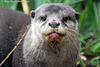 Otter  347