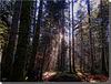 Forêt de Bélesta. France - Ariège.