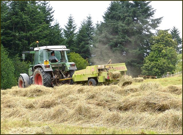 On a fait les foins pour les chevaux / We made hay for horses  [ON EXPLORE]