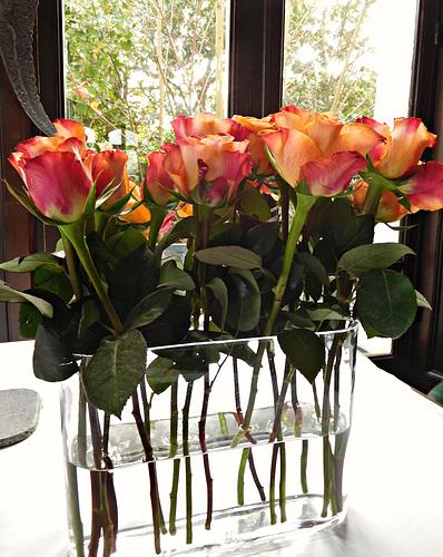 des roses,, pour un avenir meilleur,