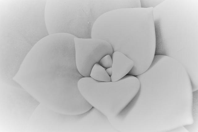 Coeurs de plante