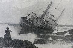 Sea Star  -  Pip