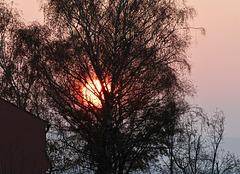 Rot leuchtete die Abendsonne durch das Geäst.