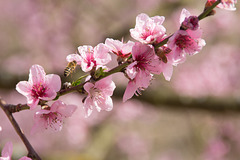 MM: Frühling