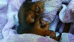 Penny Possum