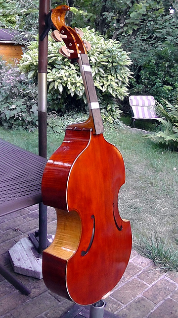 Cello gamba violoncelle