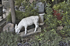Goat with Tin Can – Fattouche Restaurant, Sderot Ben Gurion, German Colony, Haifa, Israel